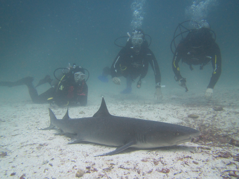 Andrew and Claudine with a Black Tip Shark