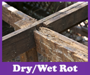 Dry and Wet Rot